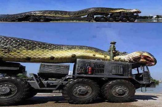 水库炸出1吨巨蟒
